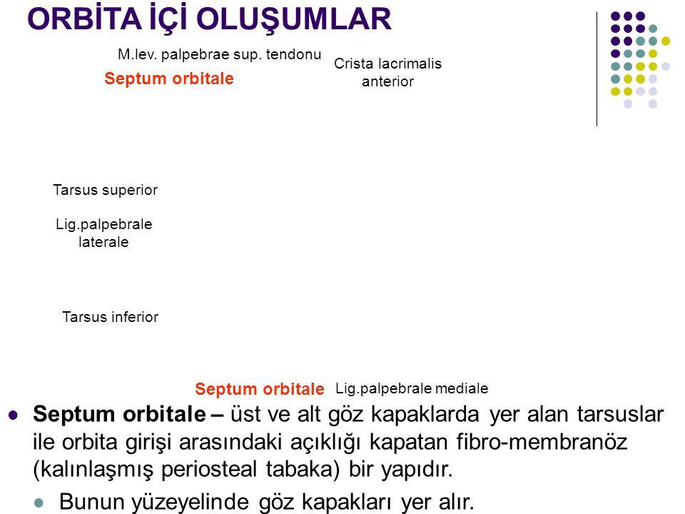 ORBİTA İÇİ OLUŞUMLAR M.lev. palpebrae sup. tendonu. Crista lacrimalis anterior. Septum orbitale. Tarsus superior.