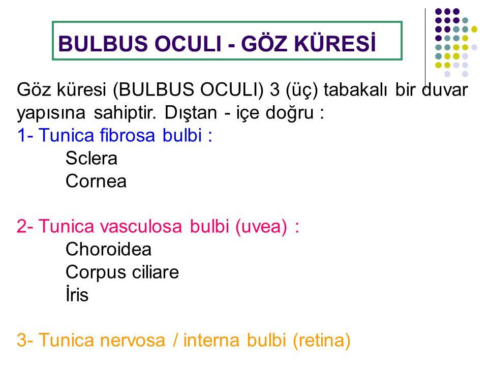 BULBUS OCULI - GÖZ KÜRESİ
