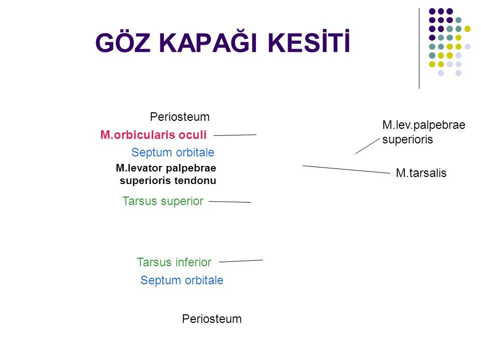 GÖZ KAPAĞI KESİTİ Periosteum M.lev.palpebrae superioris