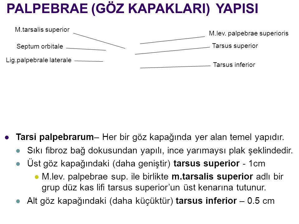 PALPEBRAE (GÖZ KAPAKLARI) YAPISI