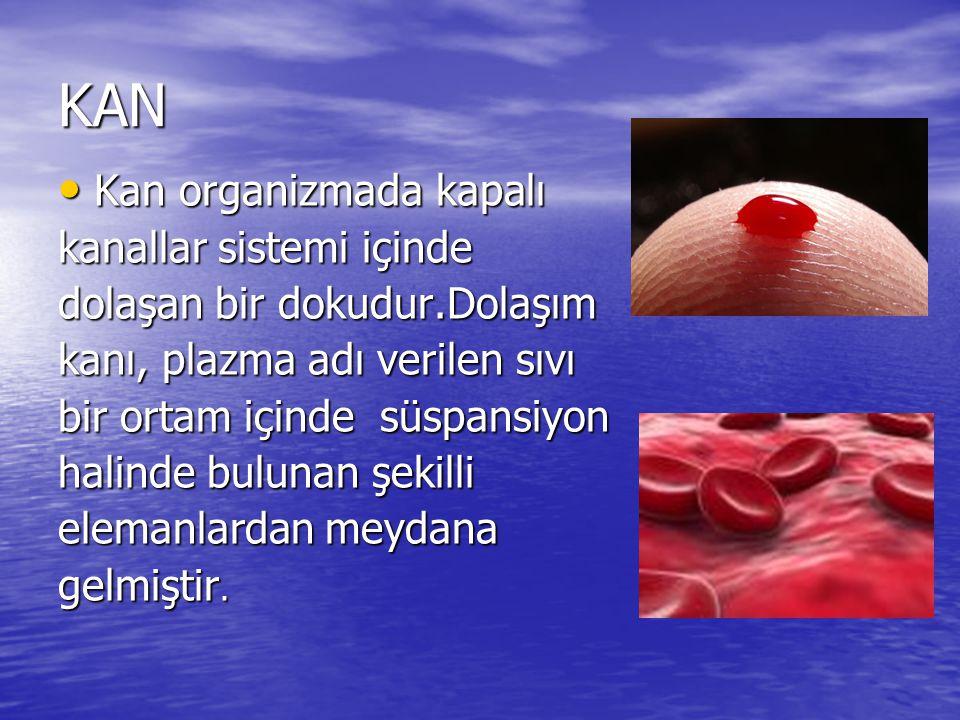 KAN Kan organizmada kapalı kanallar sistemi içinde