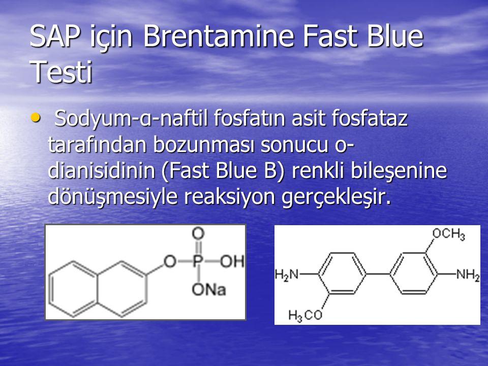 SAP için Brentamine Fast Blue Testi
