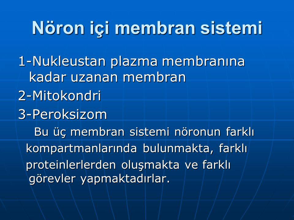 Nöron içi membran sistemi