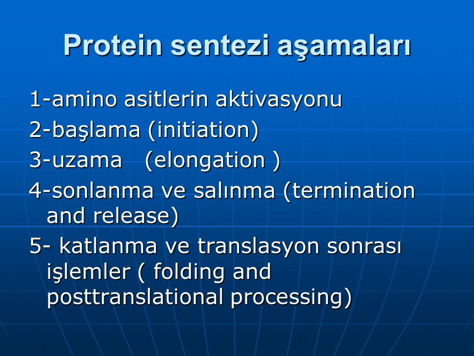 Protein sentezi aşamaları