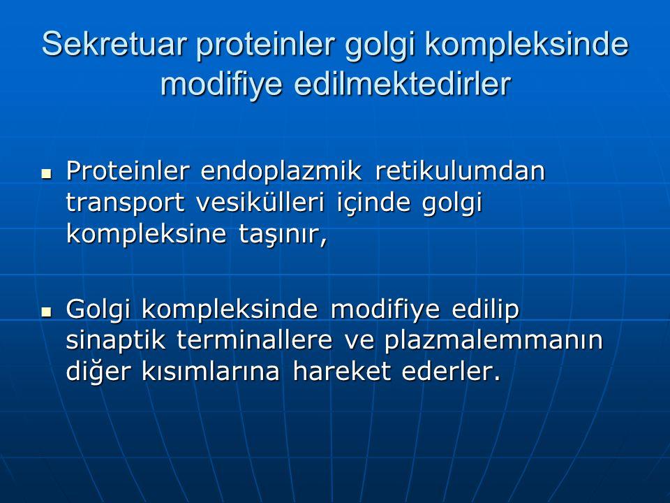 Sekretuar proteinler golgi kompleksinde modifiye edilmektedirler
