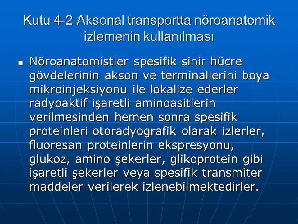 Kutu 4-2 Aksonal transportta nöroanatomik izlemenin kullanılması