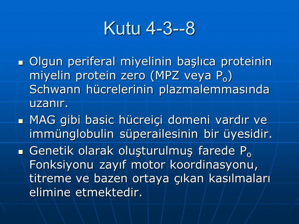 Kutu 4-3--8 Olgun periferal miyelinin başlıca proteinin miyelin protein zero (MPZ veya Po) Schwann hücrelerinin plazmalemmasında uzanır.