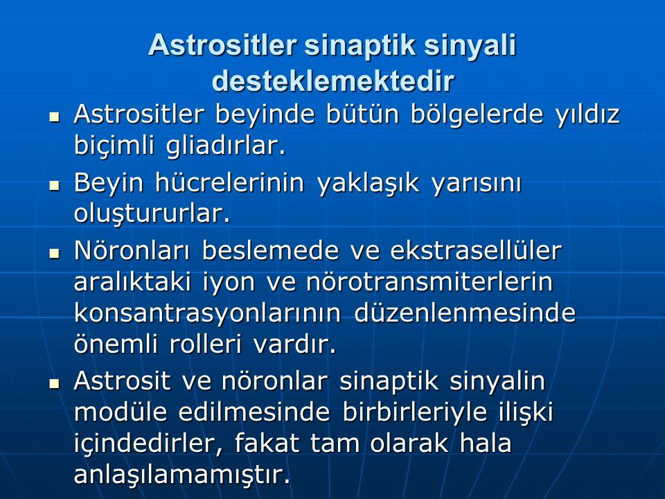 Astrositler sinaptik sinyali desteklemektedir