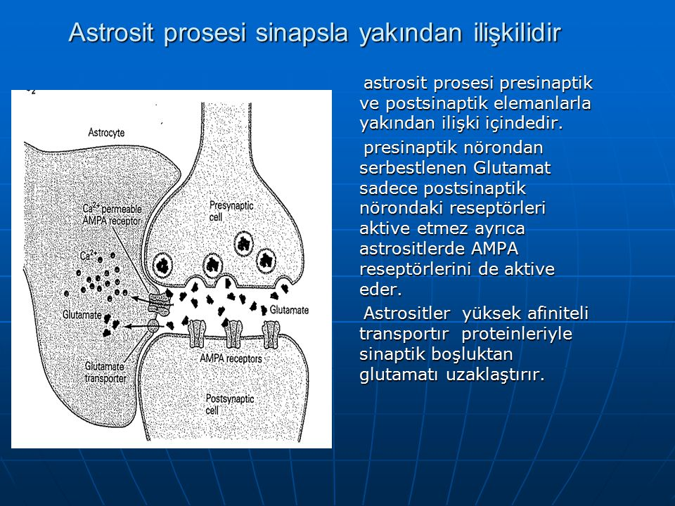 Astrosit prosesi sinapsla yakından ilişkilidir