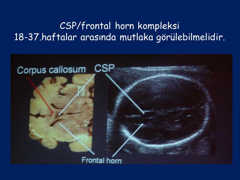 CSP/frontal horn kompleksi 18-37