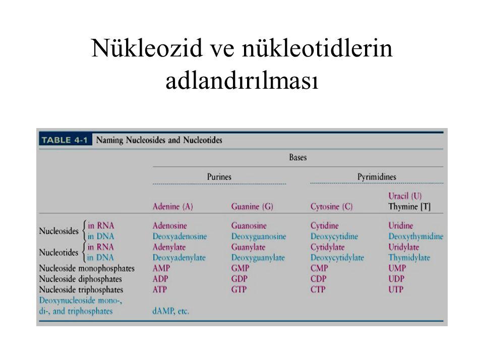 Nükleozid ve nükleotidlerin adlandırılması