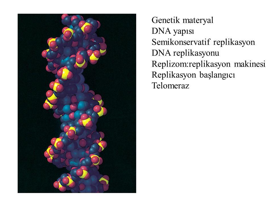 Genetik materyal DNA yapısı. Semikonservatif replikasyon. DNA replikasyonu. Replizom:replikasyon makinesi.