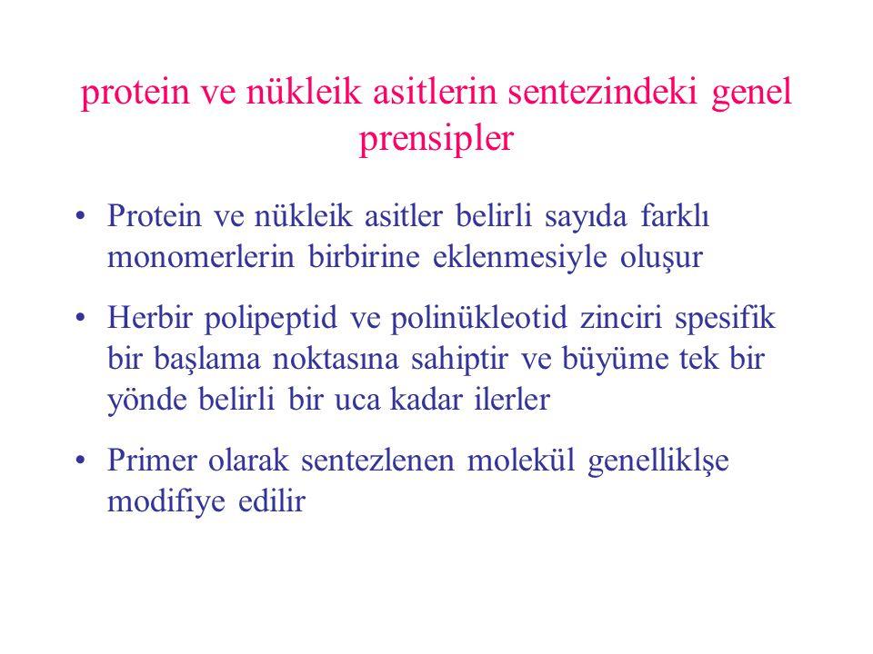 protein ve nükleik asitlerin sentezindeki genel prensipler
