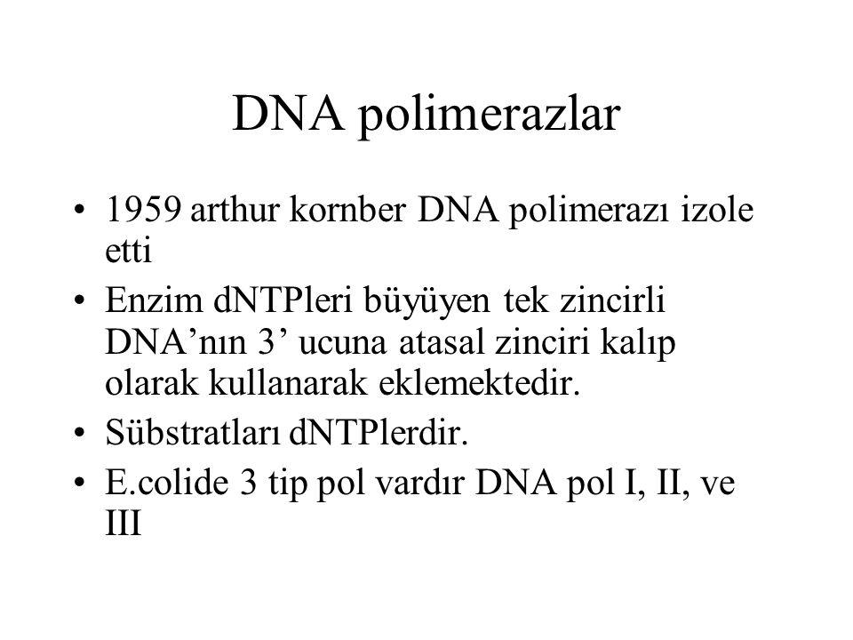 DNA polimerazlar 1959 arthur kornber DNA polimerazı izole etti