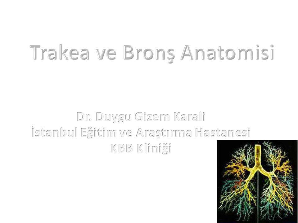 Trakea ve Bronş Anatomisi İstanbul Eğitim ve Araştırma Hastanesi