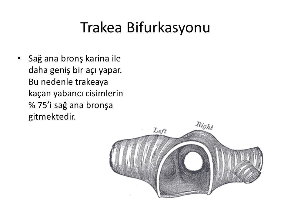 Trakea Bifurkasyonu