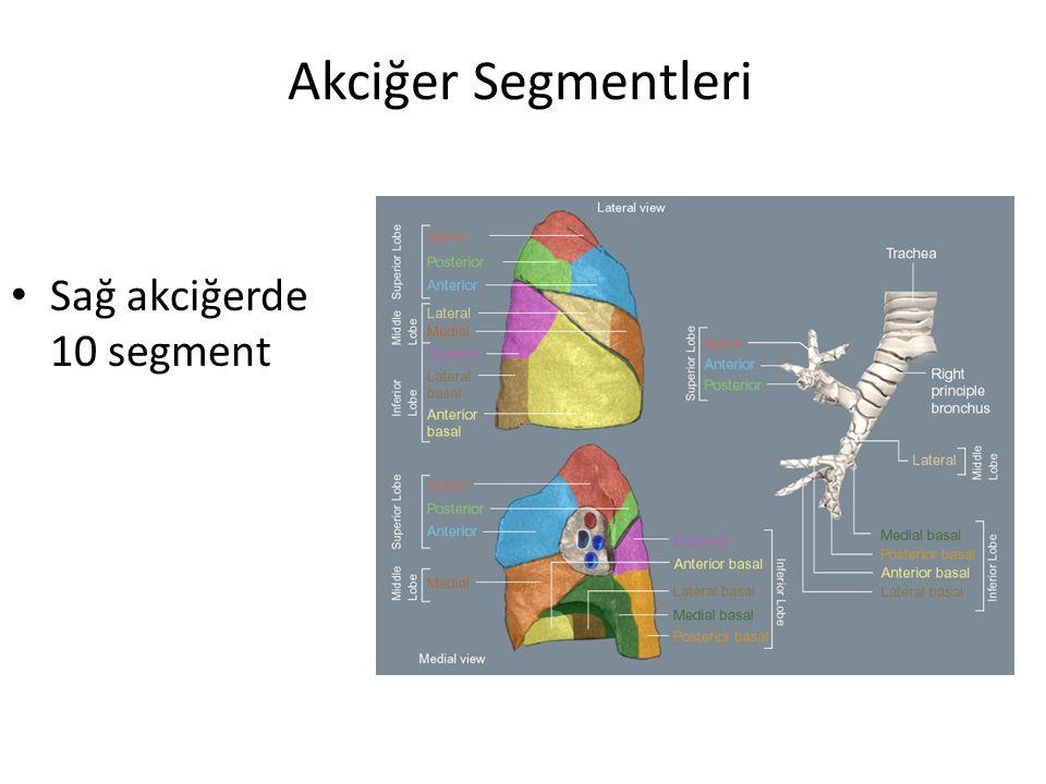 Akciğer Segmentleri Sağ akciğerde 10 segment