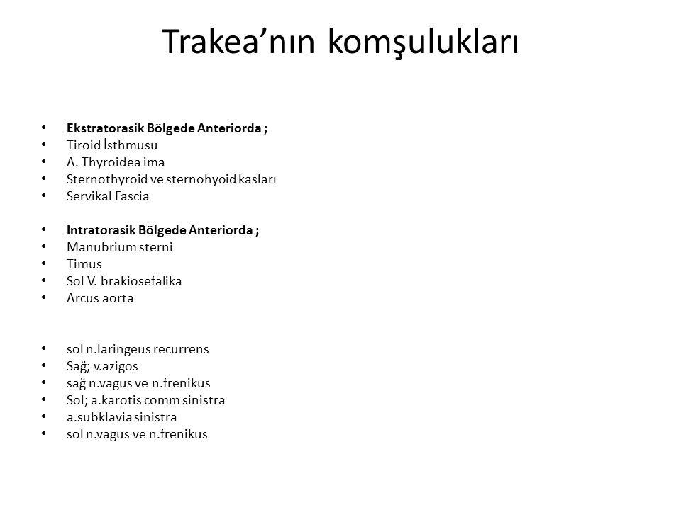 Trakea'nın komşulukları