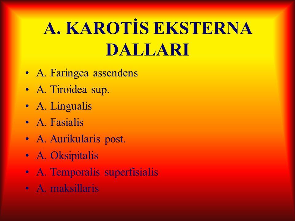 A. KAROTİS EKSTERNA DALLARI