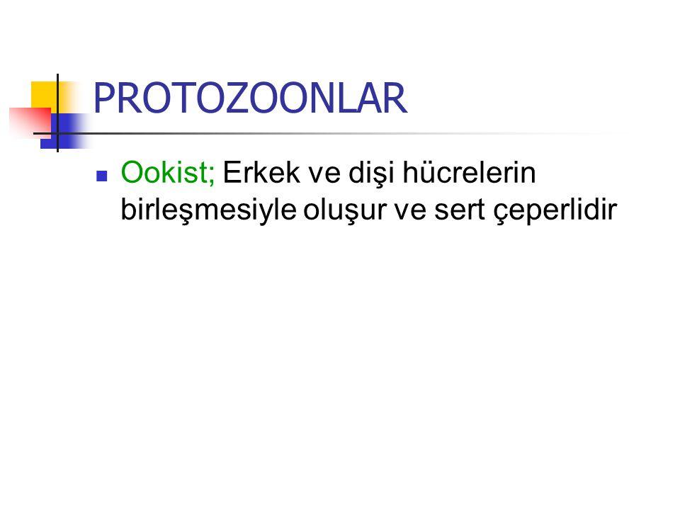 PROTOZOONLAR Ookist; Erkek ve dişi hücrelerin birleşmesiyle oluşur ve sert çeperlidir