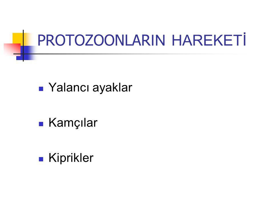 PROTOZOONLARIN HAREKETİ