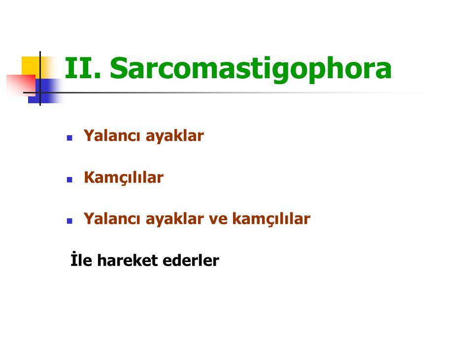 II. Sarcomastigophora Yalancı ayaklar Kamçılılar