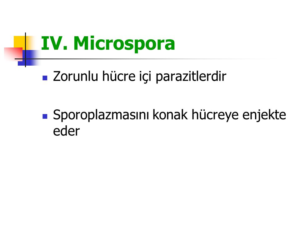 IV. Microspora Zorunlu hücre içi parazitlerdir
