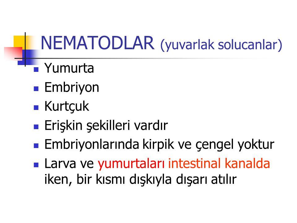 NEMATODLAR (yuvarlak solucanlar)