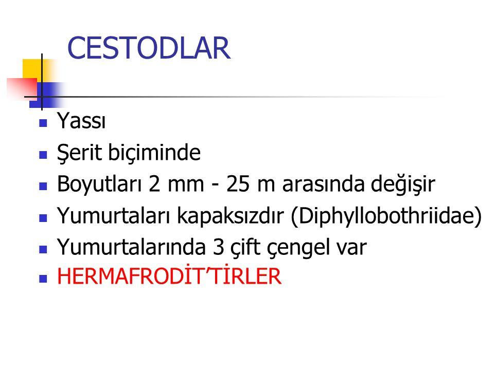 CESTODLAR Yassı Şerit biçiminde Boyutları 2 mm - 25 m arasında değişir