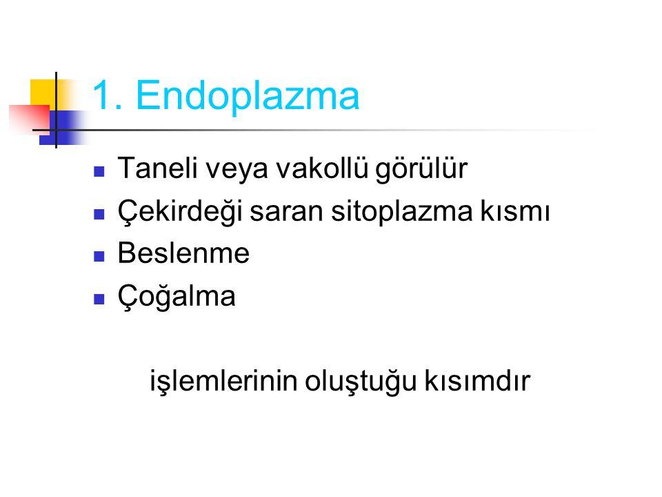 1. Endoplazma Taneli veya vakollü görülür