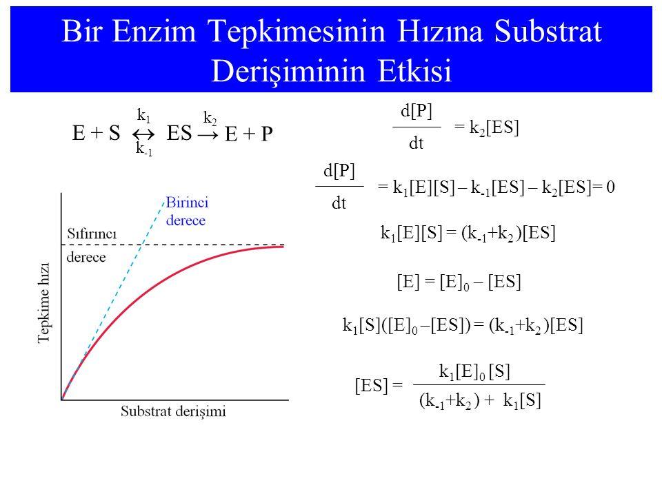 Bir Enzim Tepkimesinin Hızına Substrat Derişiminin Etkisi