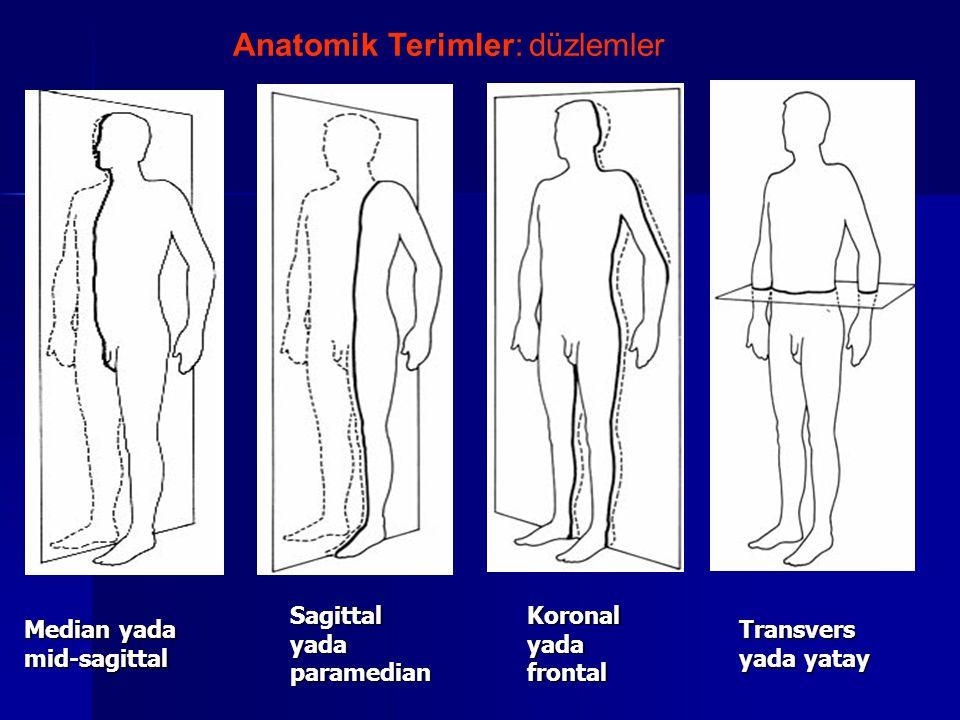 Anatomik Terimler: düzlemler
