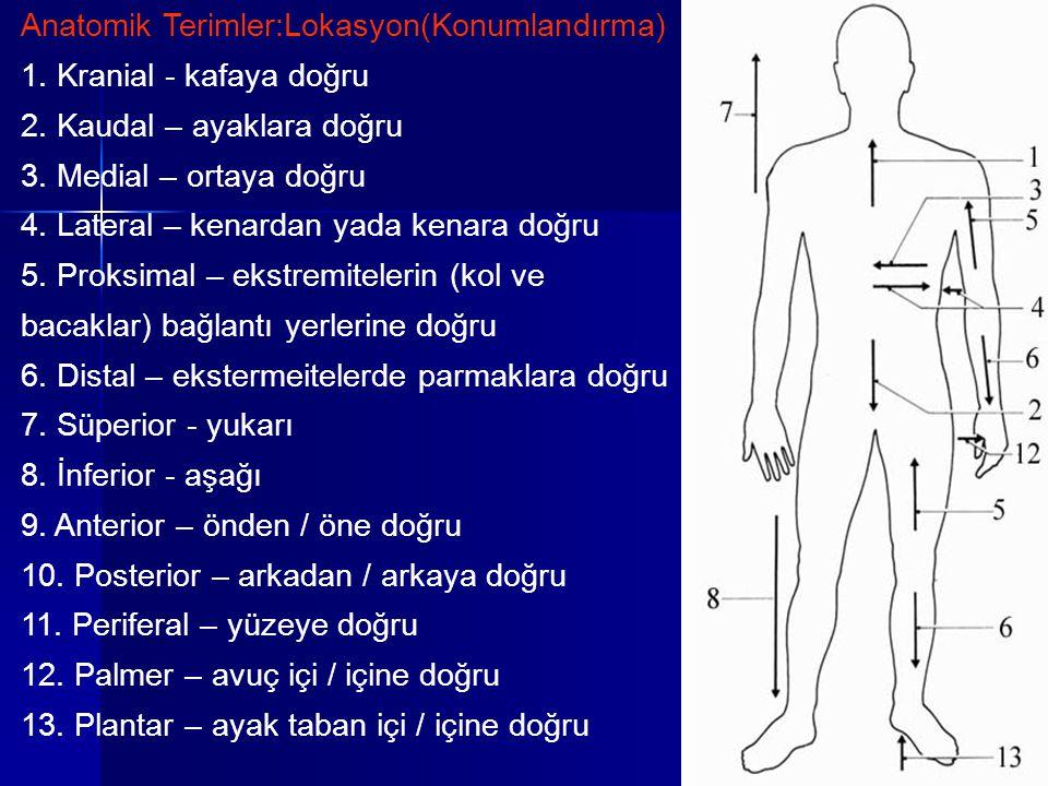 Anatomik Terimler:Lokasyon(Konumlandırma)