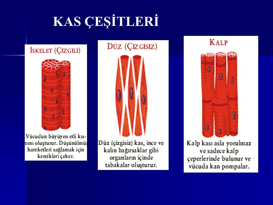 KAS ÇEŞİTLERİ