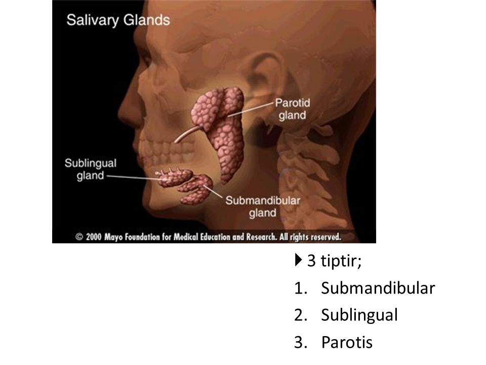 3 tiptir; Submandibular Sublingual Parotis