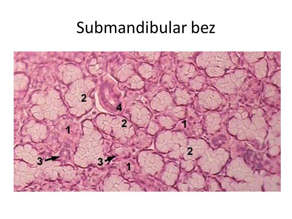 Submandibular bez Karışık.Albümünöz-seröz hakimdir.Seröz Giannüzü yarımaylıdır.