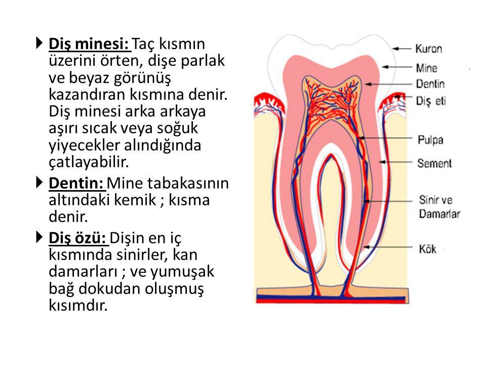 Diş minesi: Taç kısmın üzerini örten, dişe parlak ve beyaz görünüş kazandıran kısmına denir. Diş minesi arka arkaya aşırı sıcak veya soğuk yiyecekler alındığında çatlayabilir.