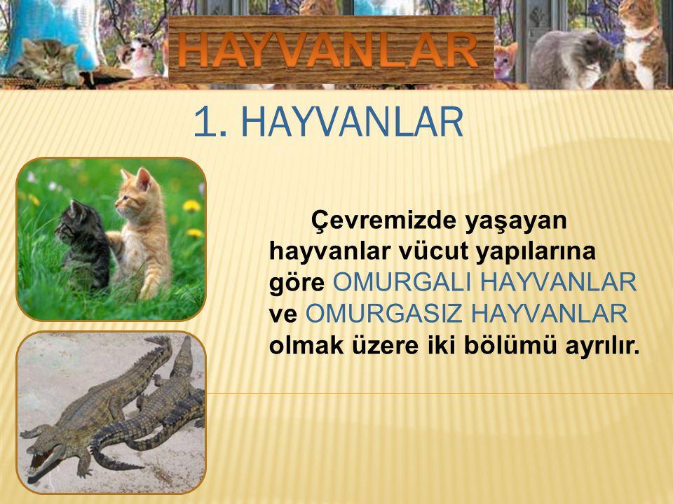 HAYVANLAR 1. HAYVANLAR.