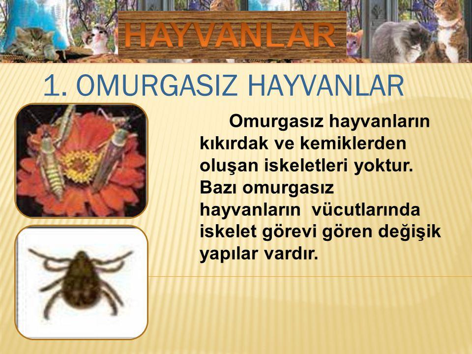 HAYVANLAR 1. OMURGASIZ HAYVANLAR
