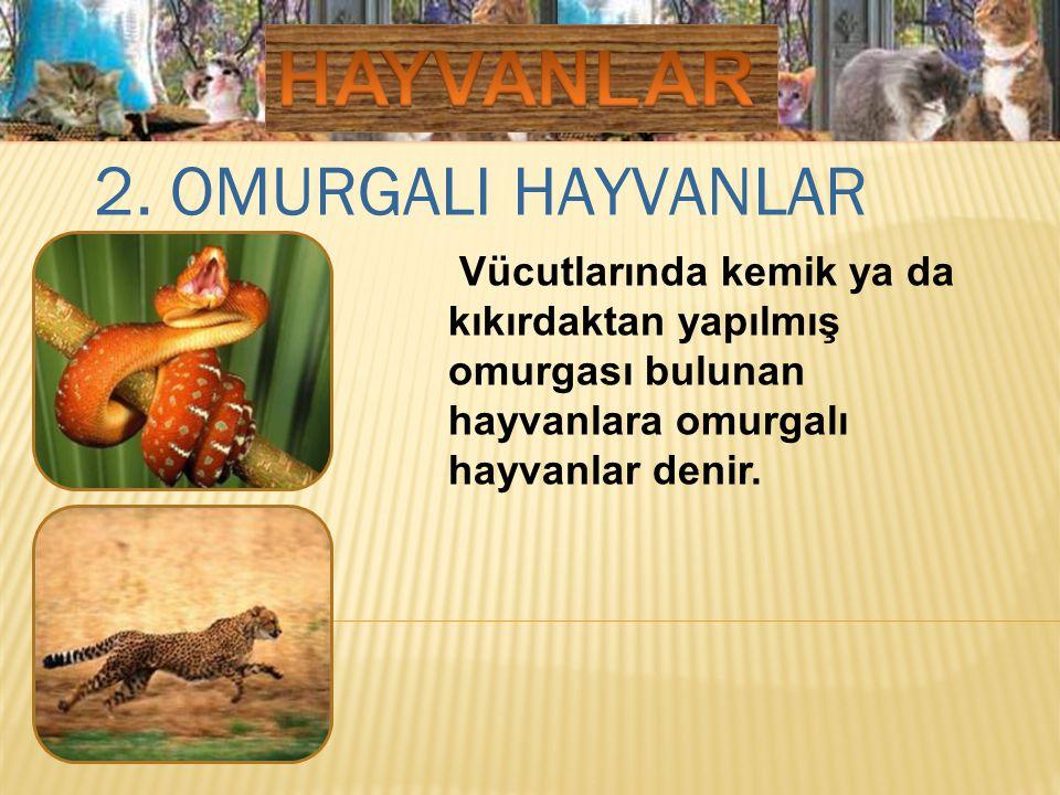 HAYVANLAR 2. OMURGALI HAYVANLAR