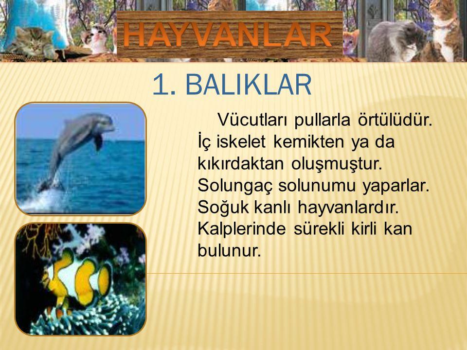 HAYVANLAR 1. BALIKLAR.