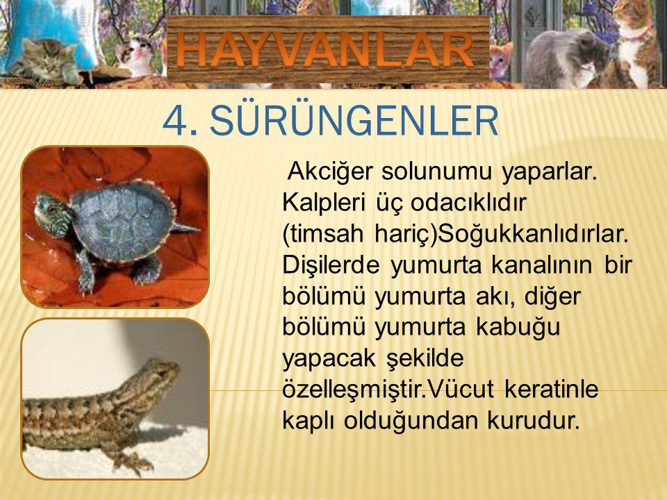 HAYVANLAR 4. SÜRÜNGENLER