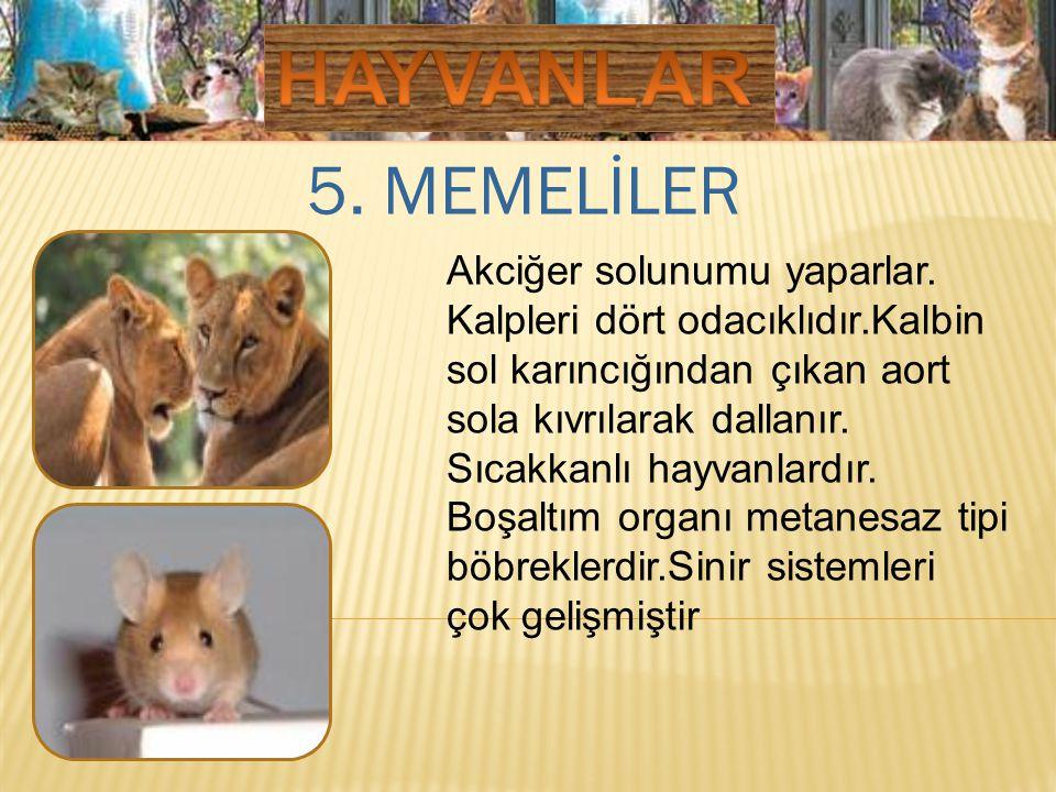 HAYVANLAR 5. MEMELİLER.
