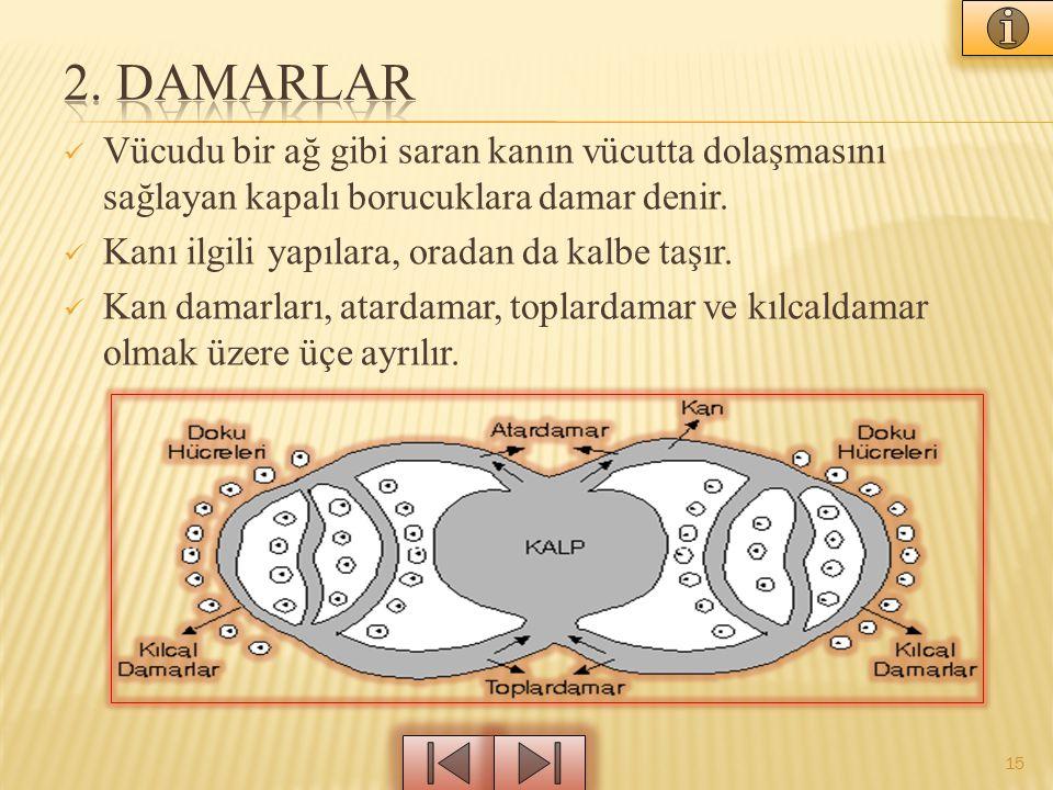 2. DAMARLAR Vücudu bir ağ gibi saran kanın vücutta dolaşmasını sağlayan kapalı borucuklara damar denir.