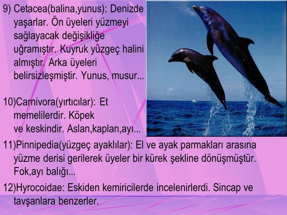 9) Cetacea(balina,yunus): Denizde yaşarlar