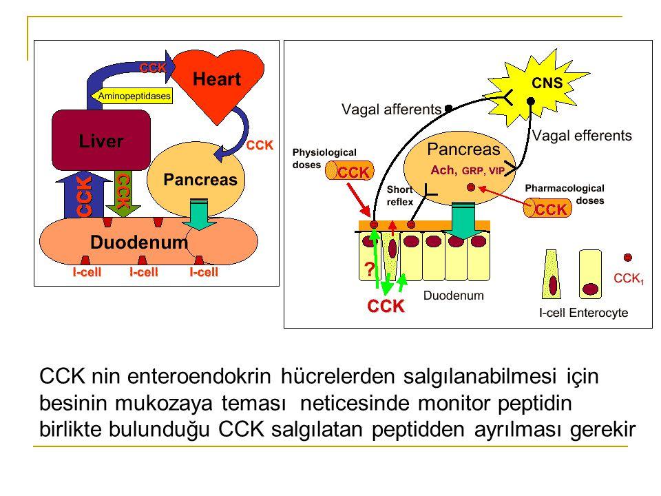 CCK nin enteroendokrin hücrelerden salgılanabilmesi için