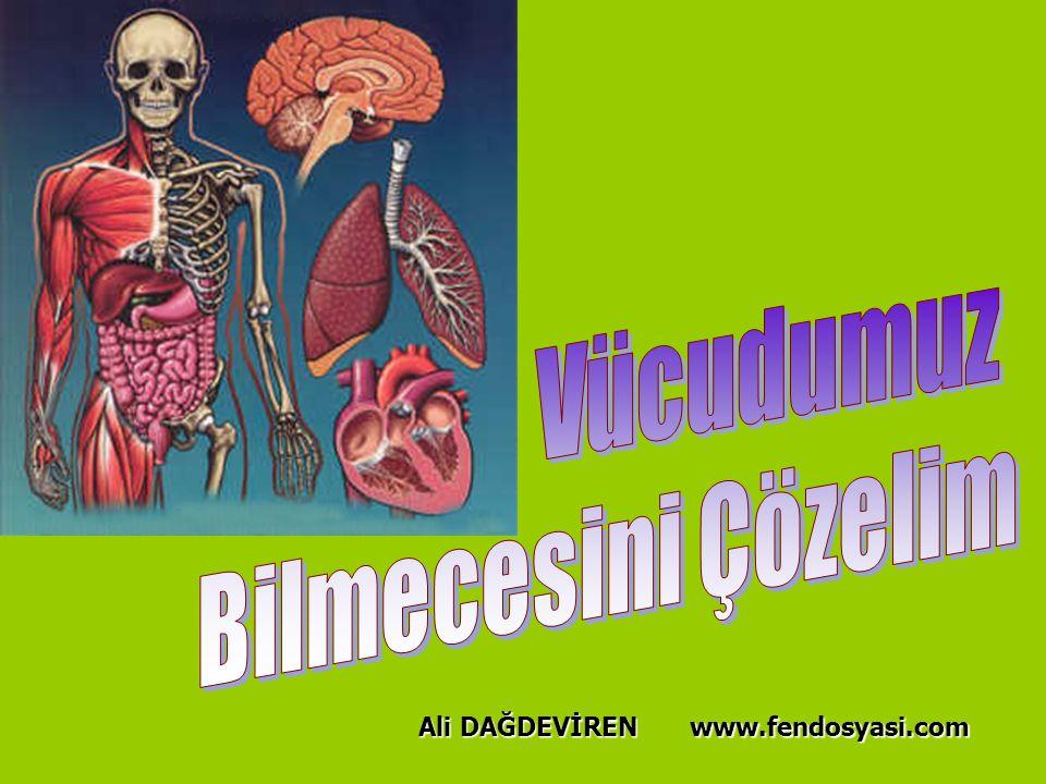 Vücudumuz Bilmecesini Çözelim Ali DAĞDEVİREN www.fendosyasi.com