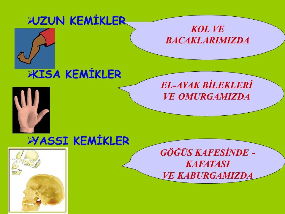 GÖĞÜS KAFESİNDE - KAFATASI
