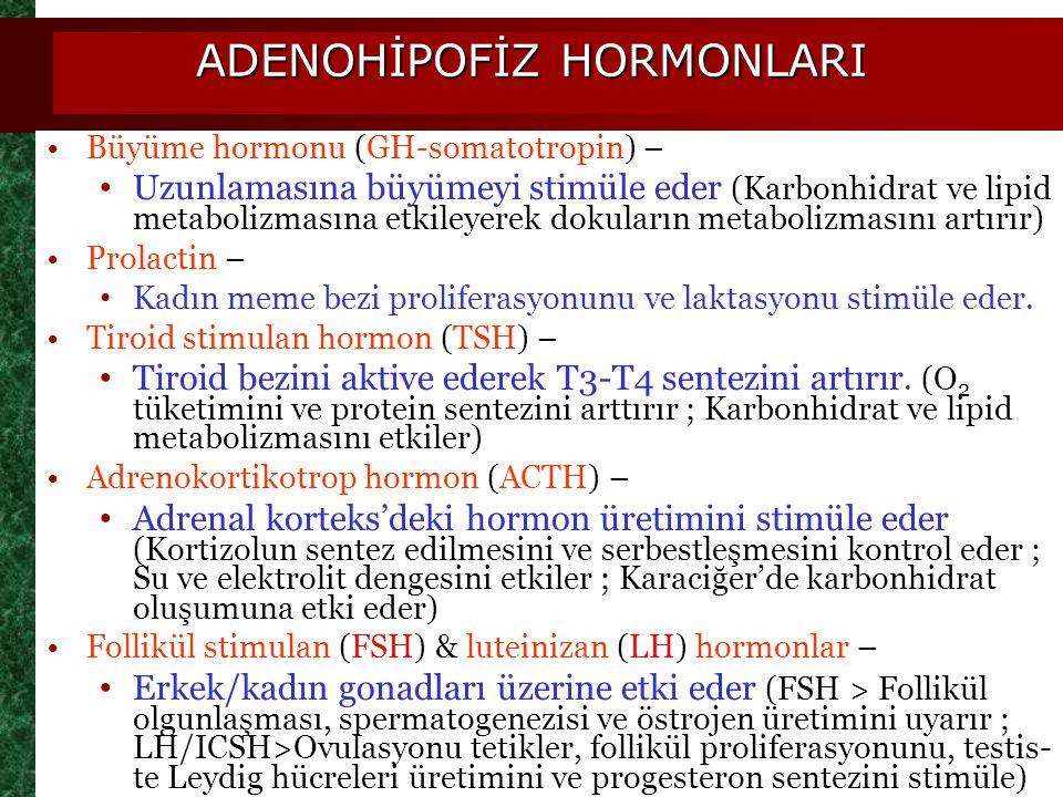 ADENOHİPOFİZ HORMONLARI
