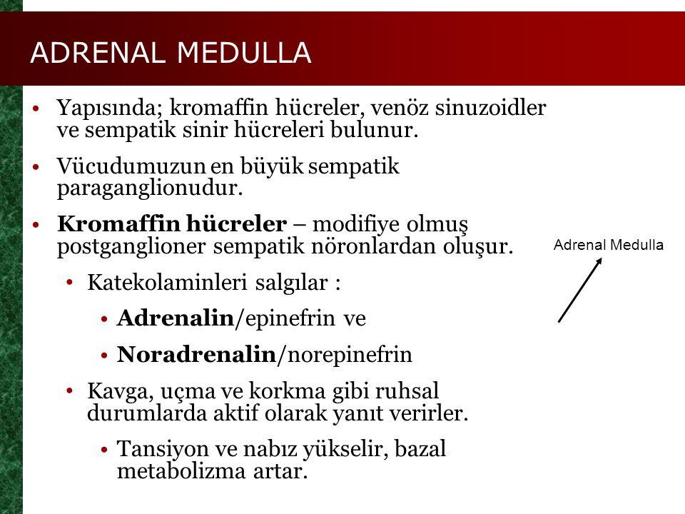 ADRENAL MEDULLA Yapısında; kromaffin hücreler, venöz sinuzoidler ve sempatik sinir hücreleri bulunur.